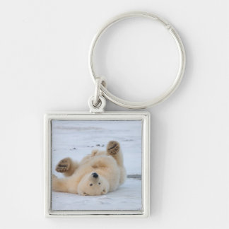 polar bear, Ursus maritimus, cub rolling 3 Key Chain
