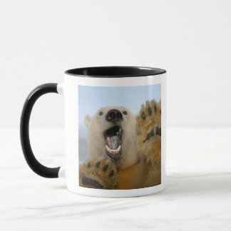 polar bear, Ursus maritimus, curiously looks in 2 Mug