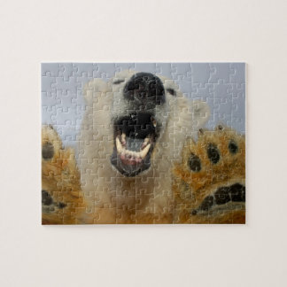 polar bear, Ursus maritimus, curiously looks in Jigsaw Puzzle