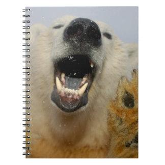 polar bear, Ursus maritimus, curiously looks in Notebook