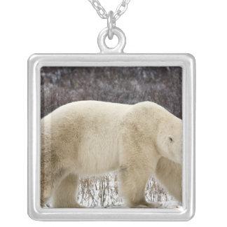 Polar Bear Ursus maritimus) in Churchill Silver Plated Necklace