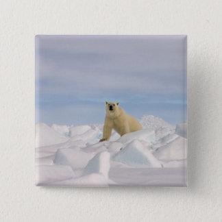 polar bear, Ursus maritimus, in rough ice on 15 Cm Square Badge