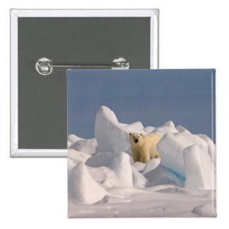 polar bear, Ursus maritimus, in rough ice on 2 Button