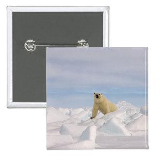 polar bear, Ursus maritimus, in rough ice on Pinback Buttons