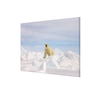 polar bear, Ursus maritimus, in rough ice on Canvas Print