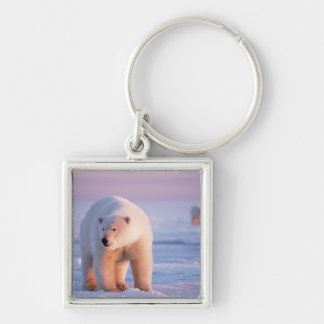 polar bear, Ursus maritimus, large boar on the Silver-Colored Square Key Ring