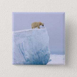 polar bear, Ursus maritimus, on a giant 15 Cm Square Badge