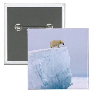polar bear, Ursus maritimus, on a giant Pinback Buttons