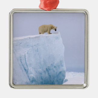 polar bear, Ursus maritimus, on a giant Christmas Ornament