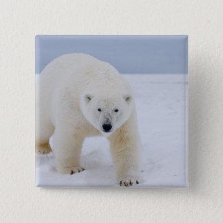 polar bear, Ursus maritimus, on ice and snow, 15 Cm Square Badge