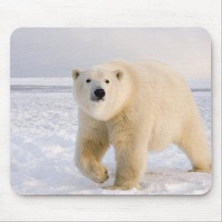 polar bear, Ursus maritimus, on ice and snow, 2 Mouse Mat