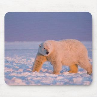 polar bear, Ursus maritimus, on ice and snow, 2 Mousepads