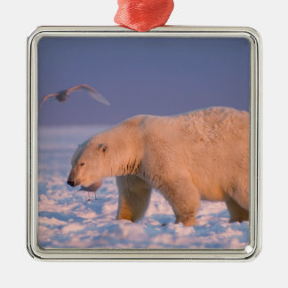 polar bear, Ursus maritimus, on ice and snow, 3 Christmas Ornament