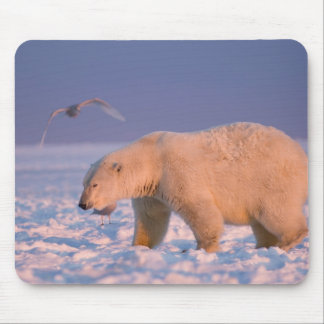 polar bear, Ursus maritimus, on ice and snow, 3 Mouse Pad