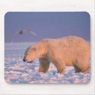 polar bear, Ursus maritimus, on ice and snow, 3 Mouse Pad