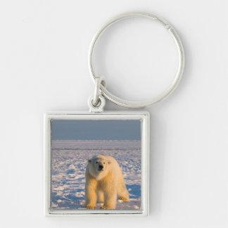polar bear, Ursus maritimus, on ice and snow, Key Ring