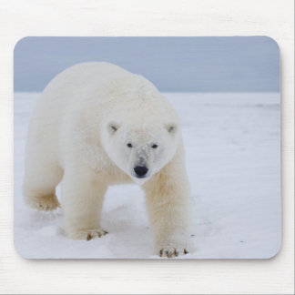 polar bear, Ursus maritimus, on ice and snow, Mouse Pad