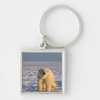 polar bear, Ursus maritimus, on ice and snow, Silver-Colored Square Key Ring