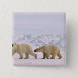 polar bear, Ursus maritimus, pair in rough ice 15 Cm Square Badge