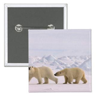 polar bear, Ursus maritimus, pair in rough ice Buttons