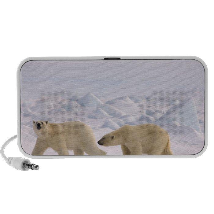 polar bear, Ursus maritimus, pair in rough ice Mp3 Speakers