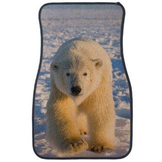 polar bear, Ursus maritimus, polar bear on ice Car Mat
