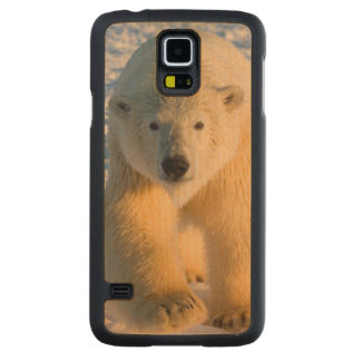 polar bear, Ursus maritimus, polar bear on ice Carved Maple Galaxy S5 Case