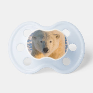 polar bear, Ursus maritimus, polar bear on ice Dummy