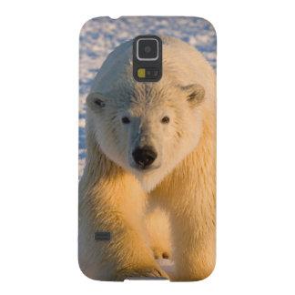 polar bear, Ursus maritimus, polar bear on ice Galaxy S5 Cases