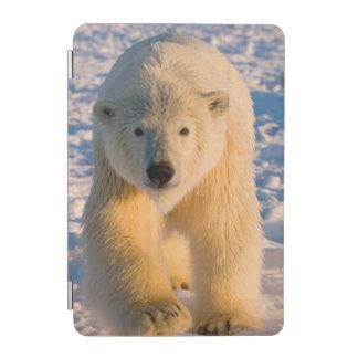 polar bear, Ursus maritimus, polar bear on ice iPad Mini Cover