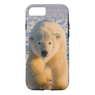 polar bear, Ursus maritimus, polar bear on ice iPhone 8/7 Case