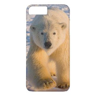 polar bear, Ursus maritimus, polar bear on ice iPhone 8 Plus/7 Plus Case