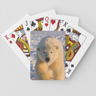 polar bear, Ursus maritimus, polar bear on ice Playing Cards