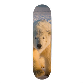 polar bear, Ursus maritimus, polar bear on ice Custom Skate Board