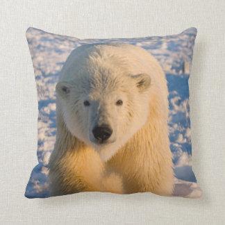 polar bear, Ursus maritimus, polar bear on ice Throw Pillow
