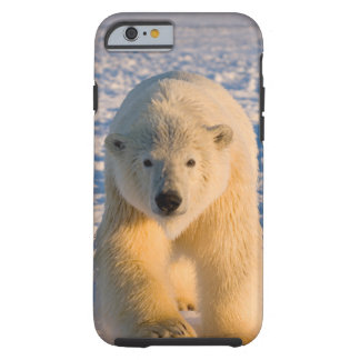 polar bear, Ursus maritimus, polar bear on ice Tough iPhone 6 Case