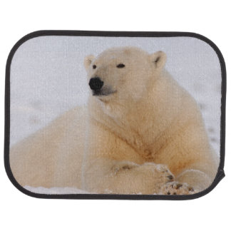 polar bear, Ursus maritimus, resting on the Car Mat