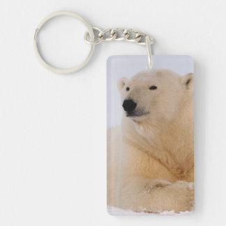 polar bear, Ursus maritimus, resting on the Double-Sided Rectangular Acrylic Key Ring
