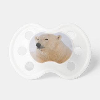 polar bear, Ursus maritimus, resting on the Dummy