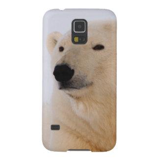 polar bear, Ursus maritimus, resting on the Galaxy S5 Covers