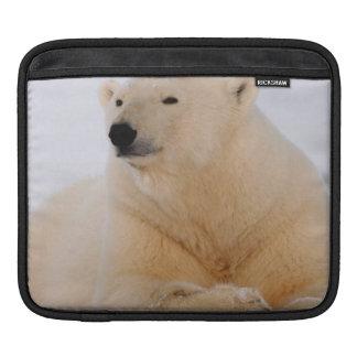polar bear, Ursus maritimus, resting on the iPad Sleeve