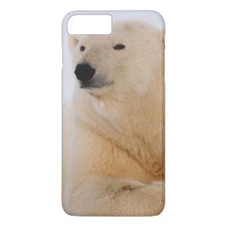 polar bear, Ursus maritimus, resting on the iPhone 8 Plus/7 Plus Case