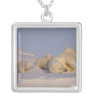 polar bear, Ursus maritimus, sow playing with Silver Plated Necklace
