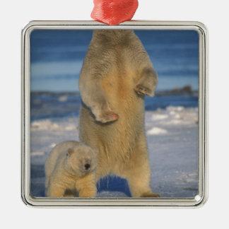polar bear, Ursus maritimus, sow with cub 2 Silver-Colored Square Decoration