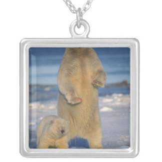 polar bear, Ursus maritimus, sow with cub 2 Silver Plated Necklace