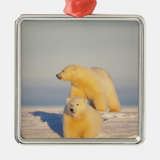 polar bear, Ursus maritimus, sow with cub 3 Silver-Colored Square Decoration