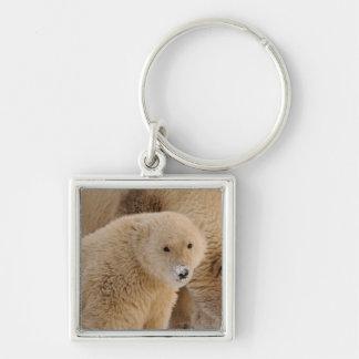 polar bear Ursus maritimus sow with cub Keychain