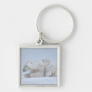 polar bear, Ursus maritimus, sow with cub Silver-Colored Square Key Ring
