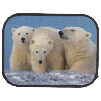 polar bear, Ursus maritimus, sow with cubs Car Mat