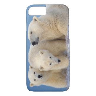 polar bear, Ursus maritimus, sow with cubs iPhone 8/7 Case
